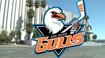 Gulls-contest-image